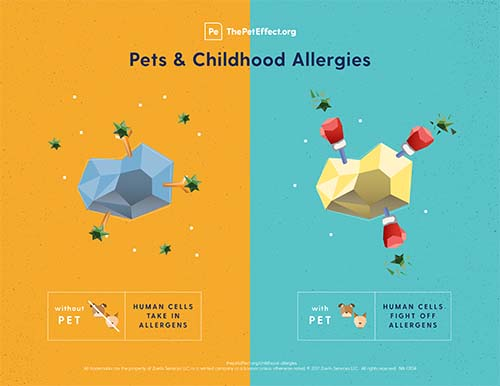 Did you know pets can help prevent allergies in children?