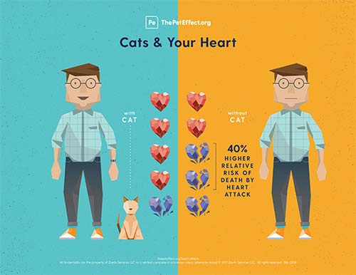 Did you know that cat owners are 40% less likely to die of a heart attack than those without a cat?