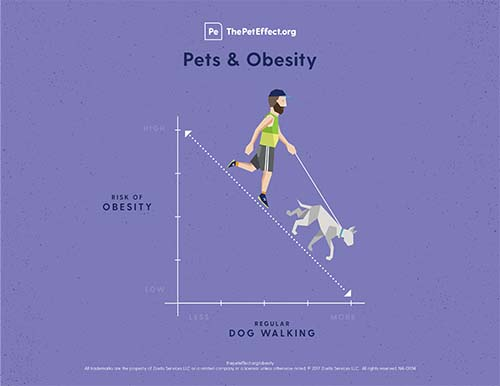 Did you know that dog ownership can reduce your risk of obesity?