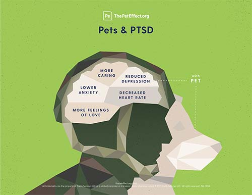 Did you know that pets can reduce symptoms of anxiety and depression in those with PTSD?