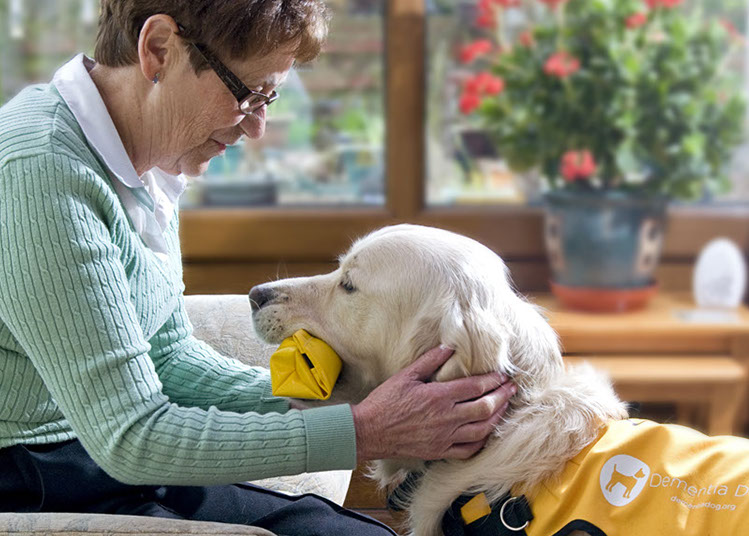 A therapy dog from Dementia Dog brings an older woman her medication