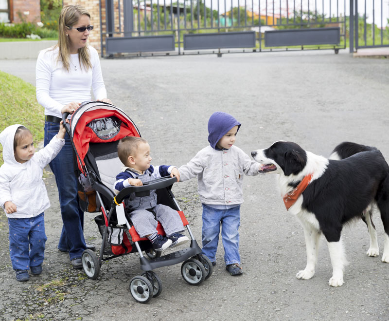 A woman introduces several young children to a service dog